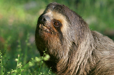 Nerdy or Just Lazy? Three Technologies That Push the Envelope on Sloth